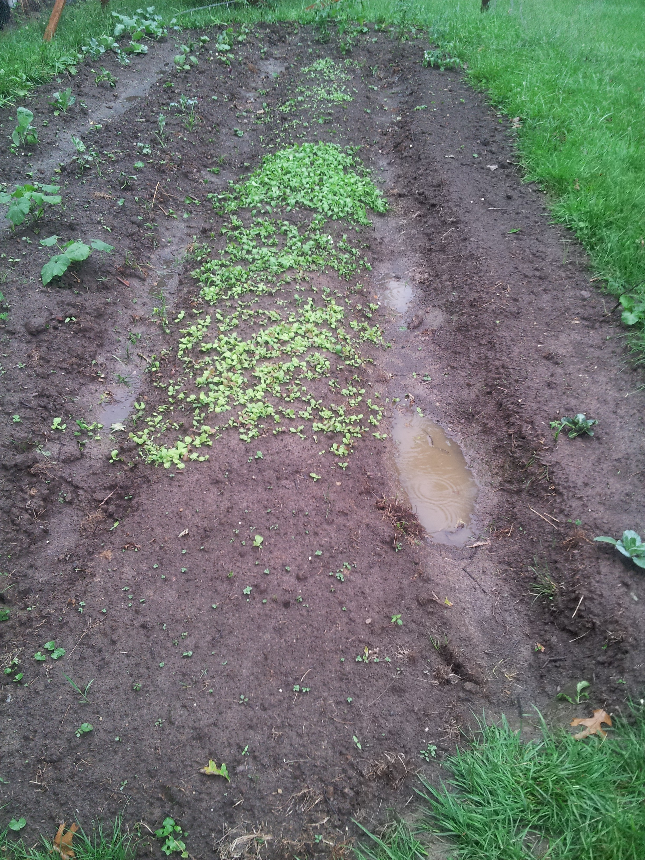 double dug mounded beds