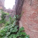 pumpkin-climbing-fence