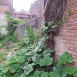 pumpkin-climbing-fence1